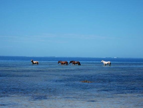 Pulau Laucala4