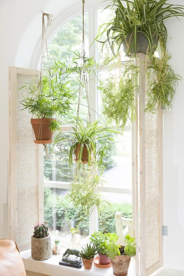 others-beautiful-white-window-sill-decor-idea-with-white-window-white-flowers-in-the-white-pot-green-plants-in-the-brown-pots-with-white-bowls-green-