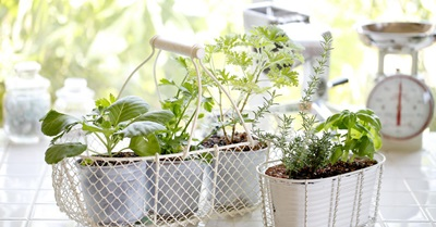 garsaugi-palodze-virtuve-urban-gardening-44900452