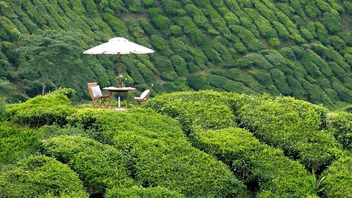 003327-06-Resort-Signature-Picnic-Experience