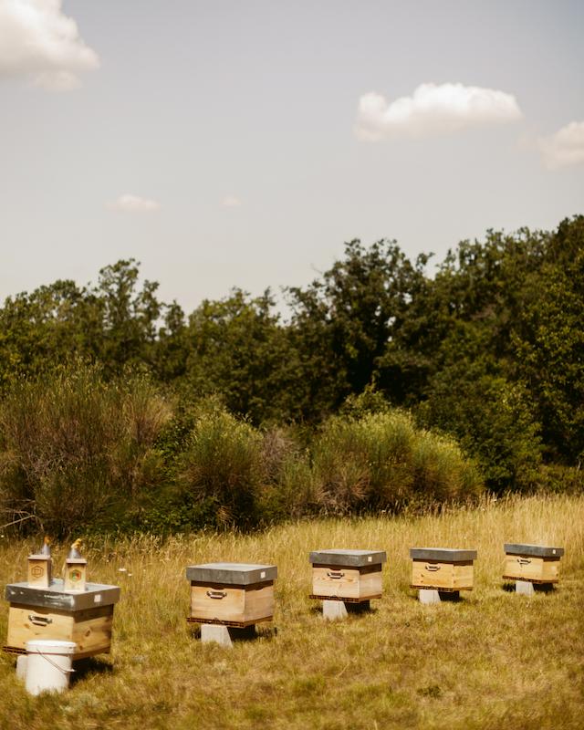 Angelina Jolie Pilihan Guerlain Sebagai 'Godmother' Women for Bees