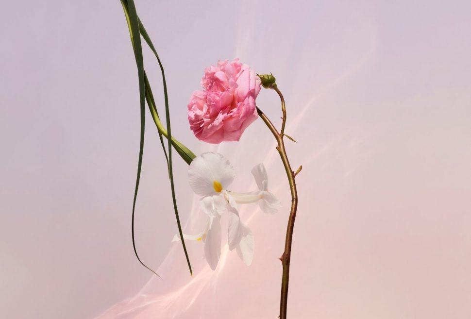Intipati  bunga Iris, May Rose dan Jasmine cukup memikat hati